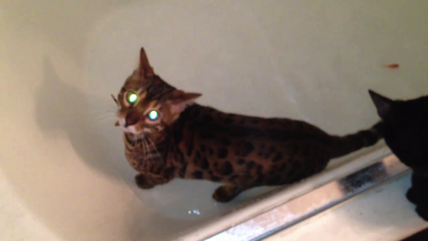 希少品種「サファリ」がお風呂で水遊び