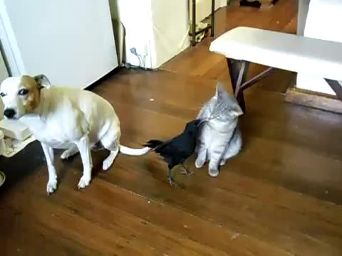 鳥からごはんをもらう猫と犬