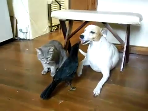 cat-and-dog-fed-by-bird-10