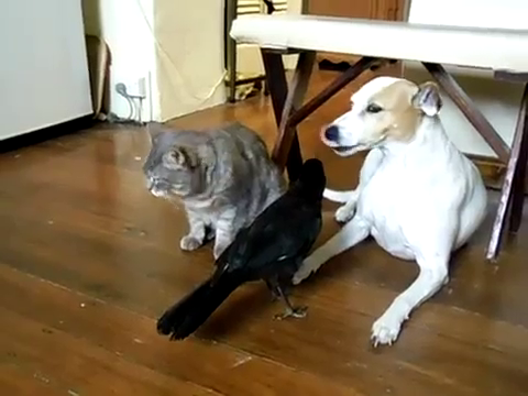 cat-and-dog-fed-by-bird-11