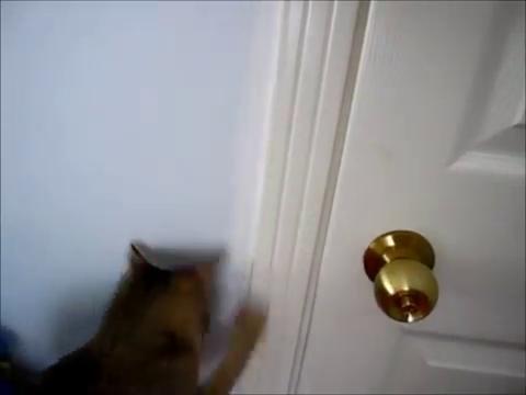 たぶん開かないドア