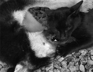 猫 vs 犬