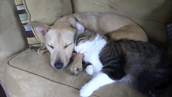 眠そうな犬と猫の抱擁