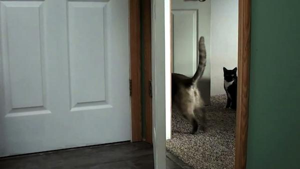 ドアを開ける猫たち