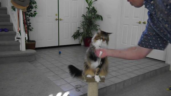握手(または、口キャッチ)を練習中。
