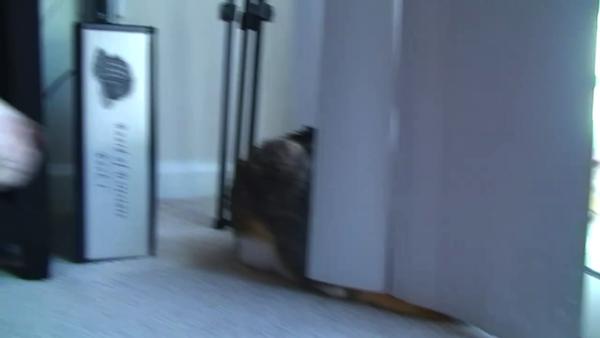 ちょっと触っただけの犬を、猛烈に怒る猫。