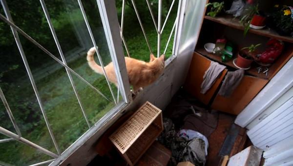 見事な動きで、窓を横切るねこ