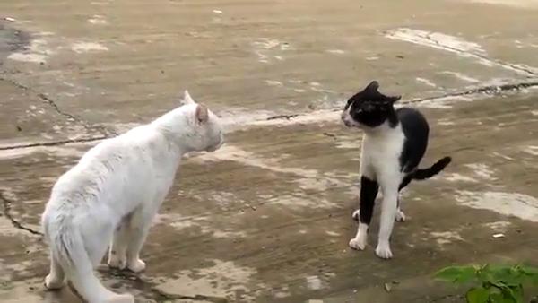 けんかで不利になり、思った以上に「スクッ」と直立した猫