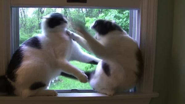 1つの窓を2匹の猫が争う