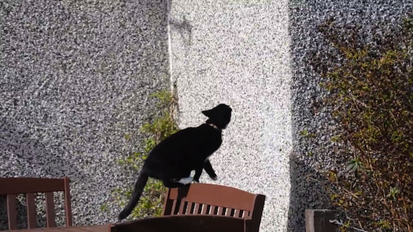 クライミング名人、猫のミリーちゃん2
