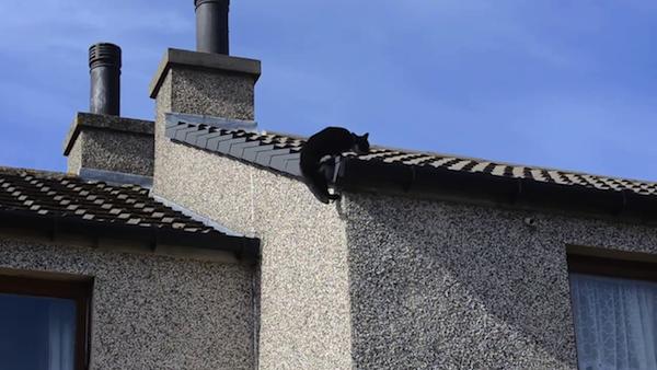 クライミング名人、猫のミリーちゃん13