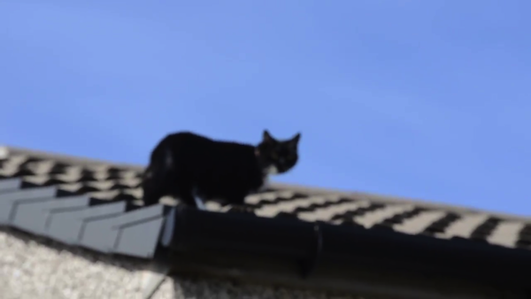 クライミング名人、猫のミリーちゃん14