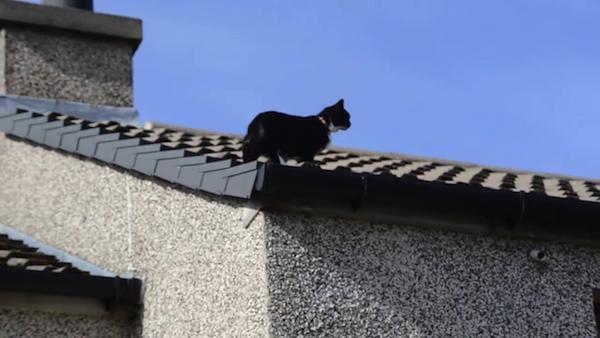 クライミング名人、猫のミリーちゃん15