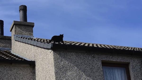 クライミング名人、猫のミリーちゃん16