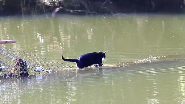 川を渡る野生猫ちゃん12