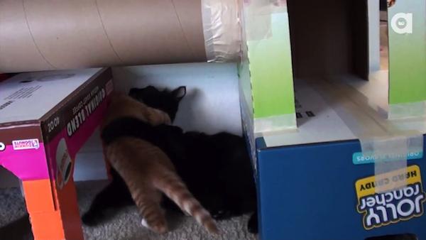 段ボール製の猫ちゃんハウスで遊ぶ、黒猫のコール君と茶トラ猫のマーマレード君。24