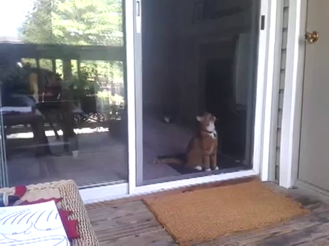 スライド・ドアをスマートに開ける猫1