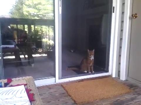 スライド・ドアをスマートに開ける猫2