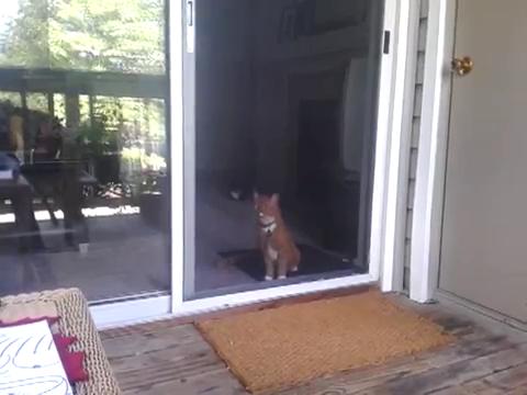 スライド・ドアをスマートに開ける猫4