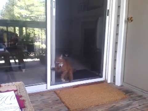 スライド・ドアをスマートに開ける猫6
