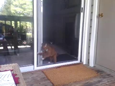 スライド・ドアをスマートに開ける猫7
