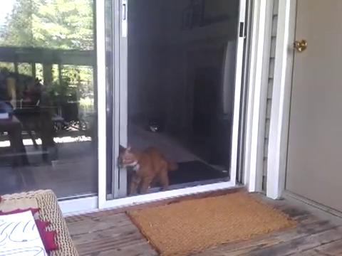 スライド・ドアをスマートに開ける猫8