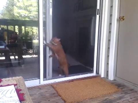 スライド・ドアをスマートに開ける猫9