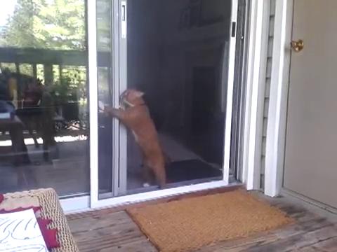 スライド・ドアをスマートに開ける猫10