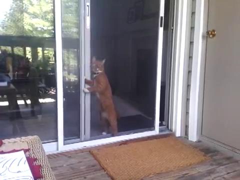 スライド・ドアをスマートに開ける猫11