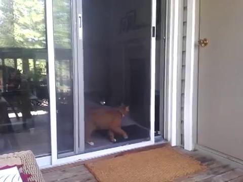 スライド・ドアをスマートに開ける猫12