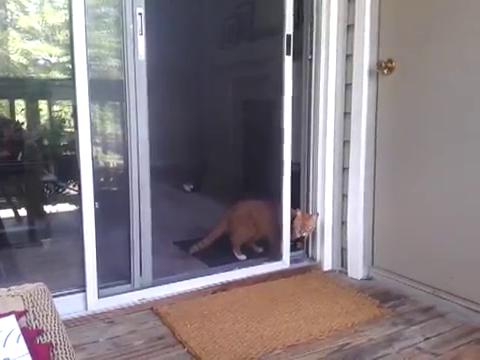 スライド・ドアをスマートに開ける猫13