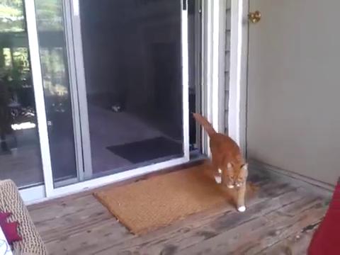 スライド・ドアをスマートに開ける猫15