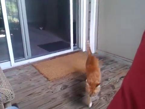 スライド・ドアをスマートに開ける猫16